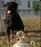 Nikita de la Corte Canina
