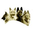 SBH Dänische Meisterschaft der Belgischen Schäferhunde