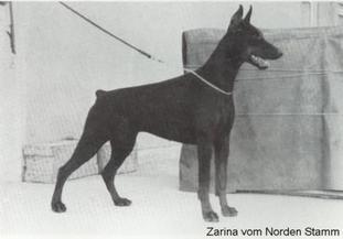 Zarina van Norden Stamm